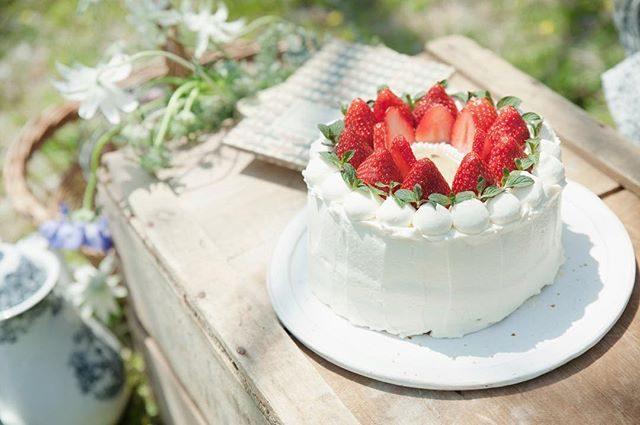 @onecolor.studio さんのお誕生日ケーキ。中はシフォンになっていて ふんわり♩お裾分けいただきましたがお外でいただくケーキは格別♩美味しい珈琲や紅茶も用意したくなっちゃいました️イチゴのケーキは 今月いっぱいのようです。お持ち込みケーキや作家さんのケーキご希望の撮影は@alku_mi スタイリングでの撮影のみお受けしております思い出に残る お誕生日パーティーを♩#お誕生日ケーキ#birthdaycake #happybirthday #ロケーションフォト #出張撮影#逗子#葉山#ig_japan #ig_kids #記念撮影 #写真好きな人と繋がりたい #写真撮ってる人と繋がりたい #コドモノ#子育て#逗子#葉山#湘南#スタイリング#お誕生日パーティー (Instagram)