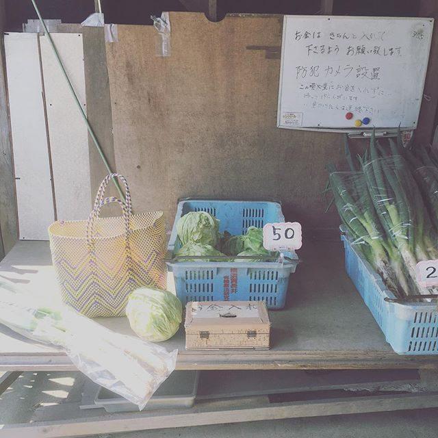 バス停から スタジオまでの道のりには無人野菜販売所が 3ヶ所。メルカドバック出勤が 便利。ネギは入りきりらず。。 #横須賀#長井#穴場#メルカドバック#無人販売所 #野菜#春キャベツが安い#主婦#スタジオ (Instagram)