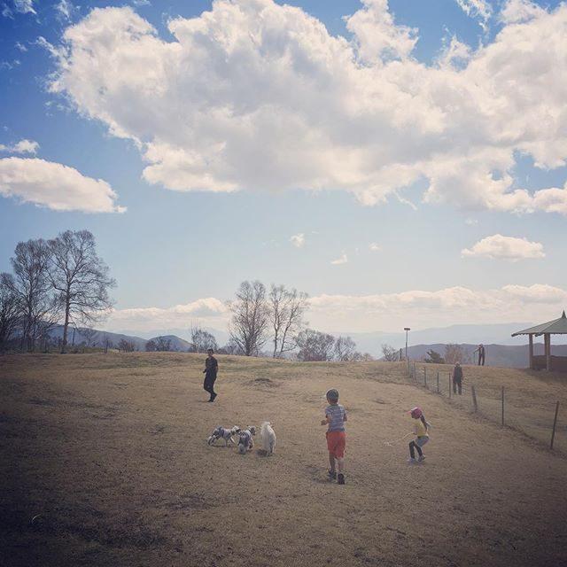 高原の ふれあい牧場にて犬生 2度目の ドッグラン🐕犬たちと ふれあう。#牛さんはまだいませんでした#菅平高原#トレイル#ドッグラン#camp #長野 #キャンプ #今日のわんこ (Instagram)