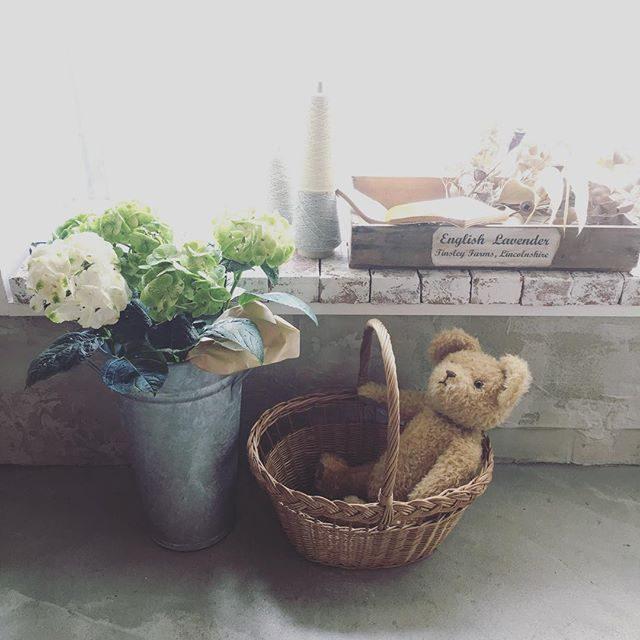 6月のはじめの ものがたりは紫陽花で♩#アルクウミスタイリング #子供写真#アルクウミ#鎌倉#ig_kids #itophotography #テディベア#ハンドメイド#bear#紫陽花 (Instagram)