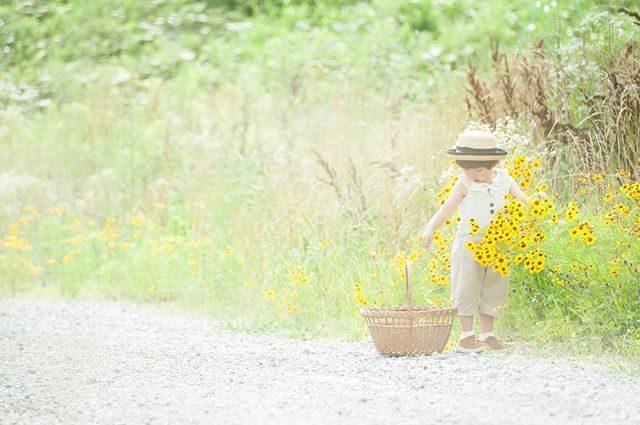 最近 道端でよく見かける黄色い花島でも 夏のお散歩道にたくさん咲いてた特攻花とよく似ていて ファインダーの向こうの小さな子供と 小さかった頃の息子の姿を重ねてしまいました。#キンケイギク#特攻花#flower#子供の成長#出張撮影#ロケーション撮影 #farm#農園#湘南#葉山#葉山女子旅 #simplelife #summer#itophotography#アルクウミスタイリング#ハンドメイド子供服#夏休み#ミニ撮影 (Instagram)