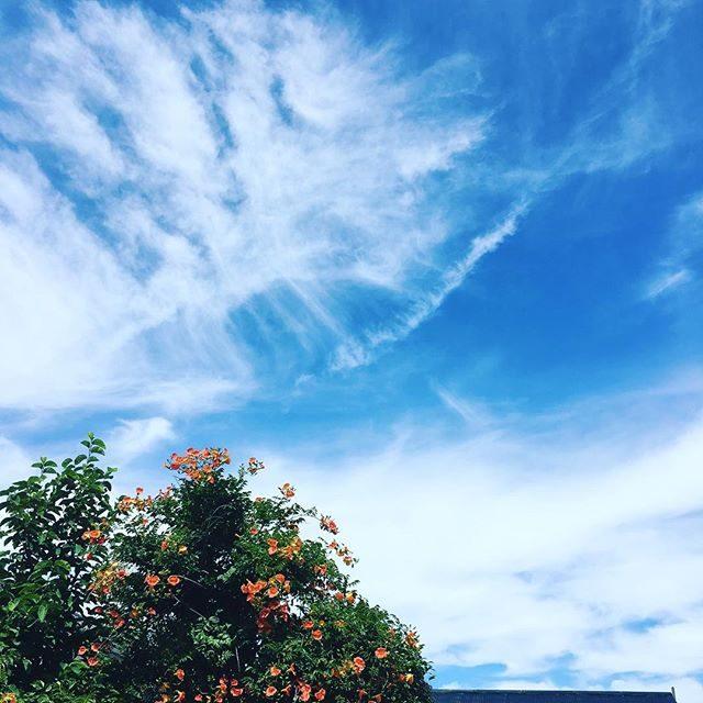 ロケハンの日くらいはくもりでもいいなーと思うくらい ジリジリ暑かったけれど頭の中は 冬️ #ロケハン#秋冬#AW#カタログ#sky#summer#葉山#夏色 (Instagram)