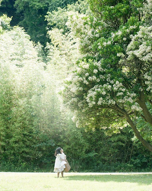 6月に 白い花が咲く この木なんていう木だろう衣装 @alku_mi #好きな木#tree#出張撮影#ロケーションフォト#kidsfashion #kidsphotography #itophotography #ig_japan #ig_kids #アルクウミスタイリング #写真好きな人と繋がりたい #写真撮ってる人と繋がりたい #ファインダー越しの私の世界 #アンティーク#湘南#葉山#birthdayphoto #お誕生日記念 #5歳#前撮り#ハンドメイド子供服 #このきなんのききになるき #summer (Instagram)