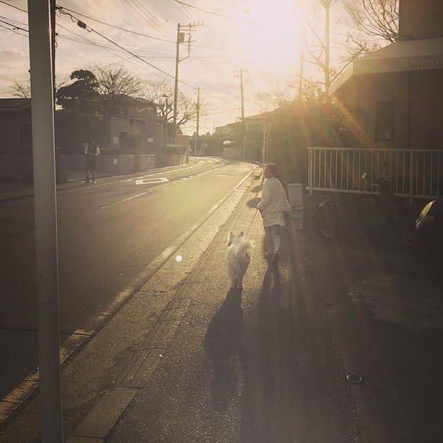 撮影早く終わったー!と思ったら今日は子どもたちも全学年早く終わってやっぱり バタバタ。。かわいい近所のお友達に早めの散歩してもらえてワンコも上機嫌♪そして日暮れも 早い。。 #ig_kids #きょうのわんこ#シルエット#散歩道 (Instagram)