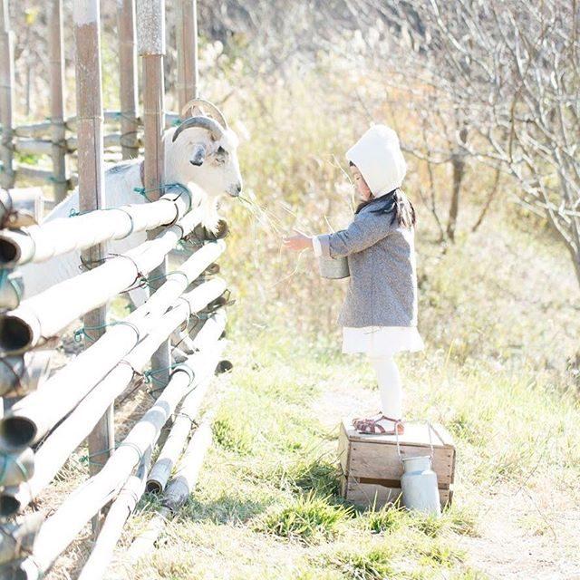 真冬のお外でも@alku_mi さんのハンドメイドコートがあればポッカポカ♪ #出張撮影#ロケーションフォト#ハンドメイドこども服#kidsphotography#antique#写真撮ってる人と繋がりたい#写真好きな人と繋がりたい#山羊#farm#アルクウミスタイリング#itophotography#湘南#子育て#コドモノ#農園 (Instagram)
