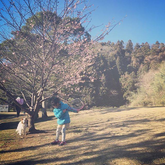 開花#お兄ちゃんランニング中#桜#桜の季節#南郷公園#葉山#桜#卒園#卒業#今日のワンコ (Instagram)