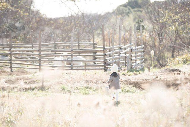 お〜い♪とかけていったらニッコニコで待ってた山羊さん🐐。 #winter#farm#alkumi#アルクウミスタイリング#出張撮影#ロケーションフォト#子ども写真#子育て#育児#写真好きな人と繋がりたい#写真撮ってる人と繋がりたい#ハンドメイドこども服#コドモノ#東京写真部#ママカメラ#お誕生日記念 (Instagram)