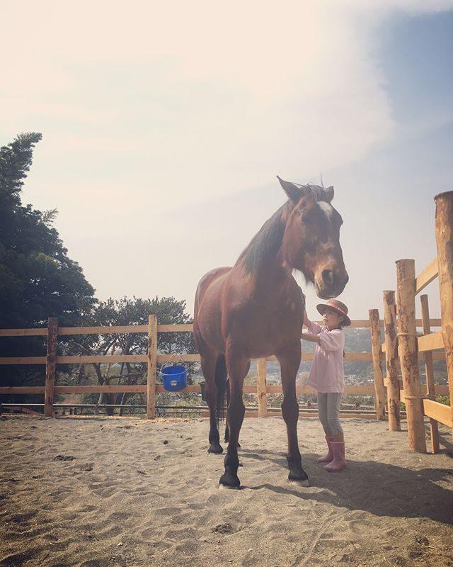どんどん縮まる馬との距離#ホースセラピー#馬#葉山#湘南#春休み#子育て#馬時間 (Instagram)