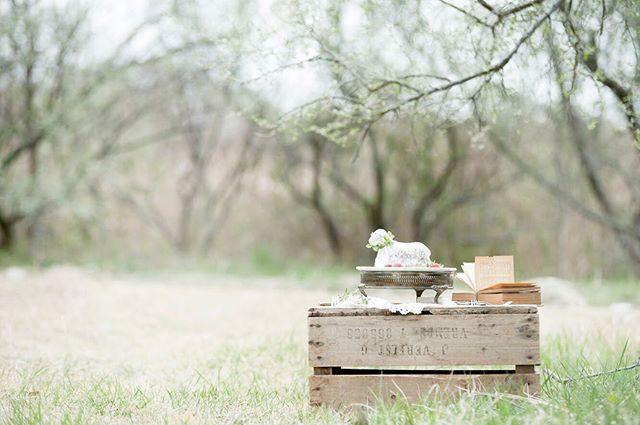 ちょうど イースターが近かったので農園で アニョーパスカルみんなで もぐもぐ。#出張撮影#ロケーションフォト#アニョーパスカル#羊#写真好きな人と繋がりたい#写真撮ってる人と繋がりたい#お誕生日記念#1歳#birthdayphoto#東京カメラ部#wedding#子ども写真#ハンドメイド子ども服#アルクウミ#farm#湘南 (Instagram)