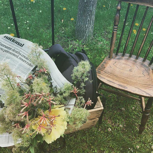 今日のお祝い花はファンキーでスモーキー!#kidsphotography#撮影小道具#出張撮影#スモークツリー#flower#ロケーションフォト (Instagram)