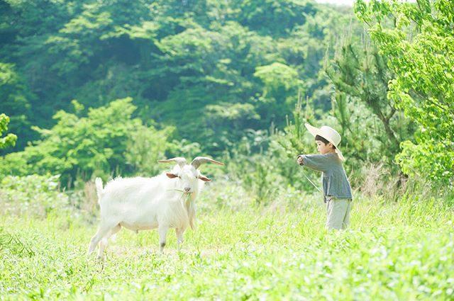 6月。農園は草が生い茂っていてヤギさんの手渡し草に対する反応が 今ひとつ うすい。。 (Instagram)