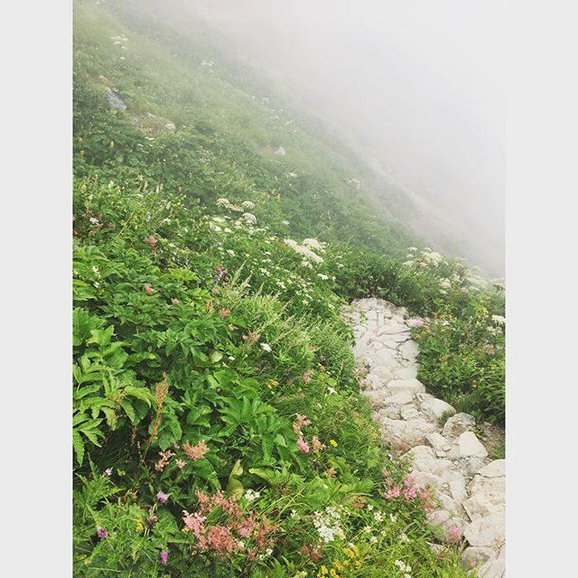 霊峰白山。高山植物豊かで夏だけど春のよう。#白山#登山#石川#夏休み#summer (Instagram)