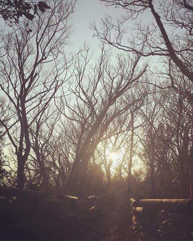 駅伝大会が終わっても走ることを続けることにしました。肩と腰の調子がとてもよいのです。町内の打ち合わせは息子のトレイル用のベストザックを借りて走って向かい帰り道は 山越え。日がどんどん長くなってきて山道も暗くないので焦らずのんびり走れて嬉しい。#プチトレイルランニング#ラン活#隙間時間に走る#葉山 (Instagram)