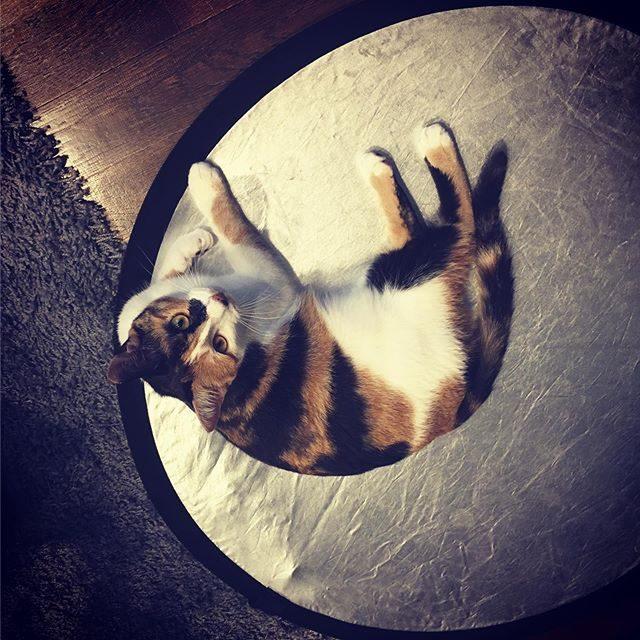 撮影中今日のレフ板とある日のレフ板◯#レフ板は猫と子どもに大人気#出張撮影#撮影日記 (Instagram)