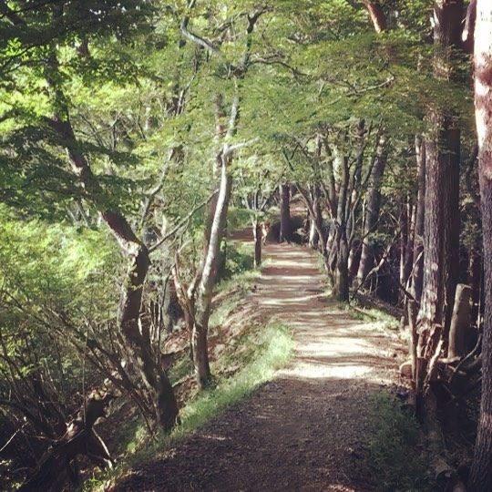 早朝 4:30 逗子と葉山のエキスパートなトレイルランナーさんたちと塔ノ岳。参加できないかもーと聞いていたお友達がお迎えに来てくれてテンション 一気に舞い上がるも久しぶりのトレイルランニングで練習不足につき 山頂まで登りきれず。。それでも 楽しかった!!と喜ぶ お兄ちゃんの山の日⛰山を走る という 子どもにとってはかなりマイノリティな世界だけど雨あがり 早朝や夜暑い日 寒い日 雪の日。。どんな条件でもいつも一緒に 楽しそうに走ってくれるお友達は 貴重で大切な存在。彼が中学生になって一緒に同じレースに出るのが楽しみらしいのだけどまずは 今週末の岩櫃城登山レース。宿題終わらず塾のテスト勉強終わらず期末テスト勉強 手付かずさらには トレーニング不足で出場危うし。。 #山の日#トレイルランニング#ジュニアトレイルランニング#ジュニア選手権#塔ノ岳#中学生日記#宿題終わらず (Instagram)
