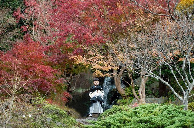最近 遠方からのお客様からよくいただく質問「湘南地方の紅葉はいつ頃ですか?」近年の気候なんだか読めなくてはっきりとはお伝えできないのですが七五三シーズンを過ぎた12月上旬あたり かなぁと。ロケーション撮影自然との出逢いは 一期一会なのが 魅力です。12月のご予約状況は週末は中旬までご予約いっぱいとなっておりますが平日は まだ空きがあります。#出張撮影#紅葉#七五三#レンタル着物#七五三後撮り#七五三前撮り#写真好きな人と繋がりたい#写真撮ってる人と繋がりたい#キッズモデル#コドモノ#ig_japan#湘南#葉山#鎌倉#ロケーションフォト (Instagram)
